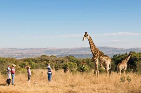 FD-Giraffe-&-people-hr