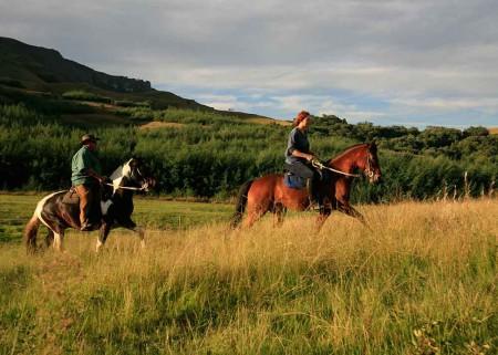 Cleopatra's Mountain Farm House, Horses