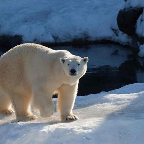 Arctic: The Northwest Passage