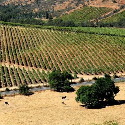 La Casona at Matetic Vineyards, Wine region