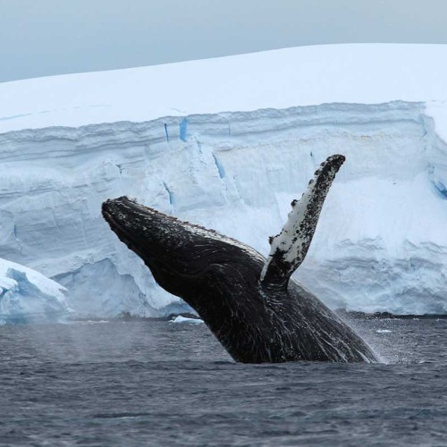 Antarctic Circle Fly Cruise