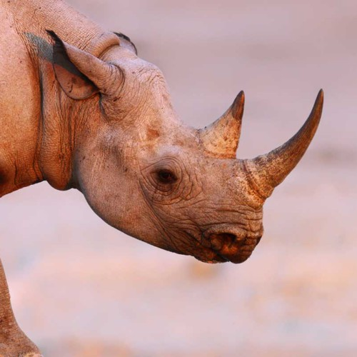 Namibia Conservation Safari