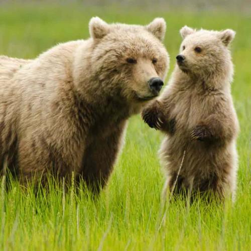 Extension: Bear Watching