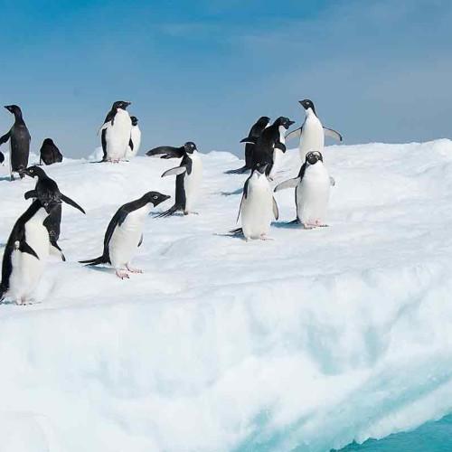 Antarctica, Falkland Islands & South Georgia