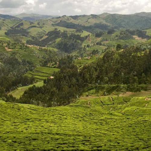Kenya and Rwanda