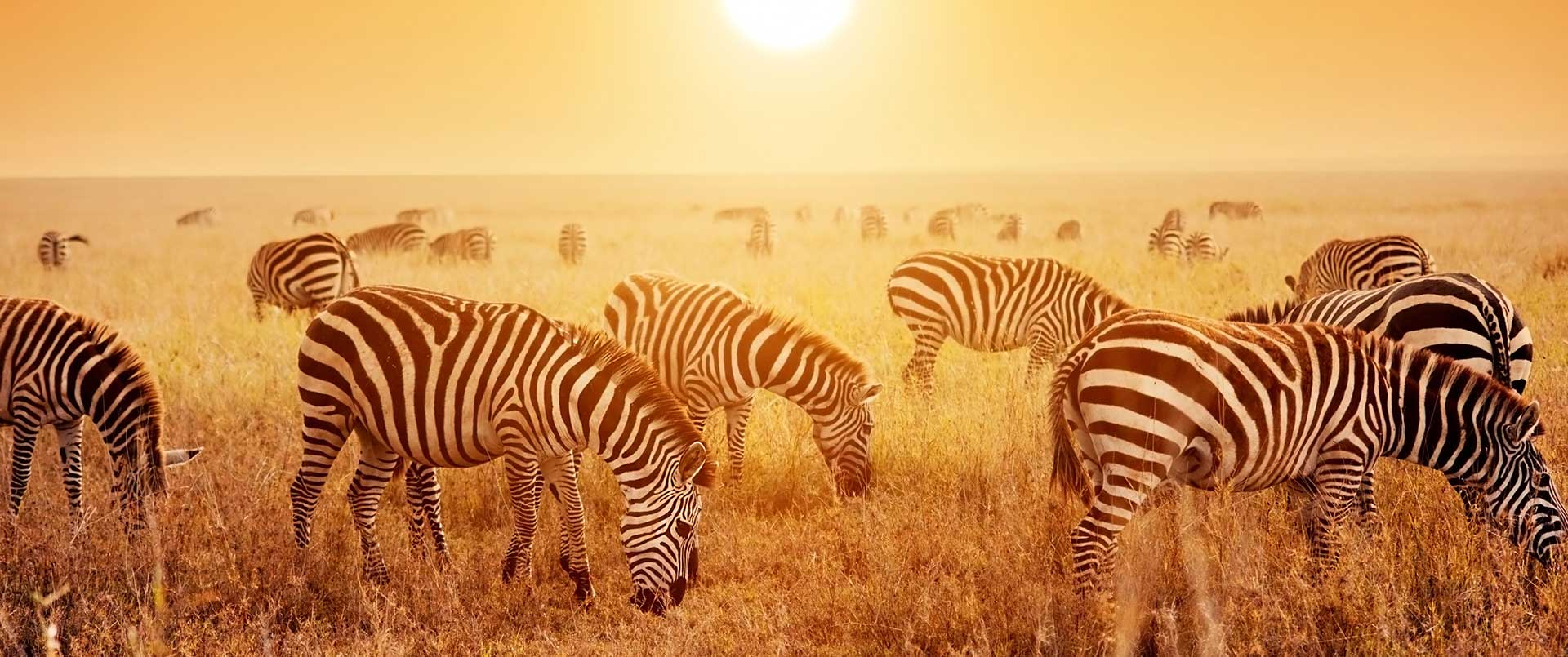 Half term safari in Tanzania