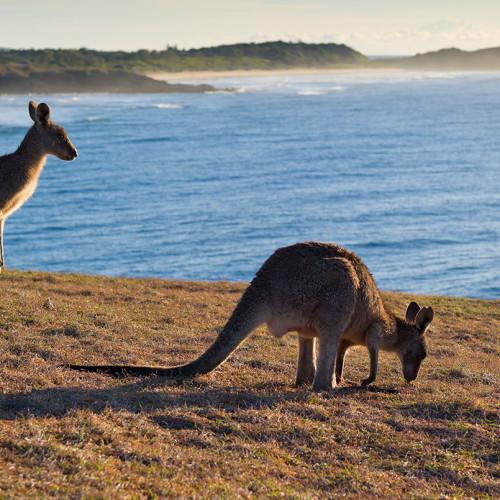 Australia over the top