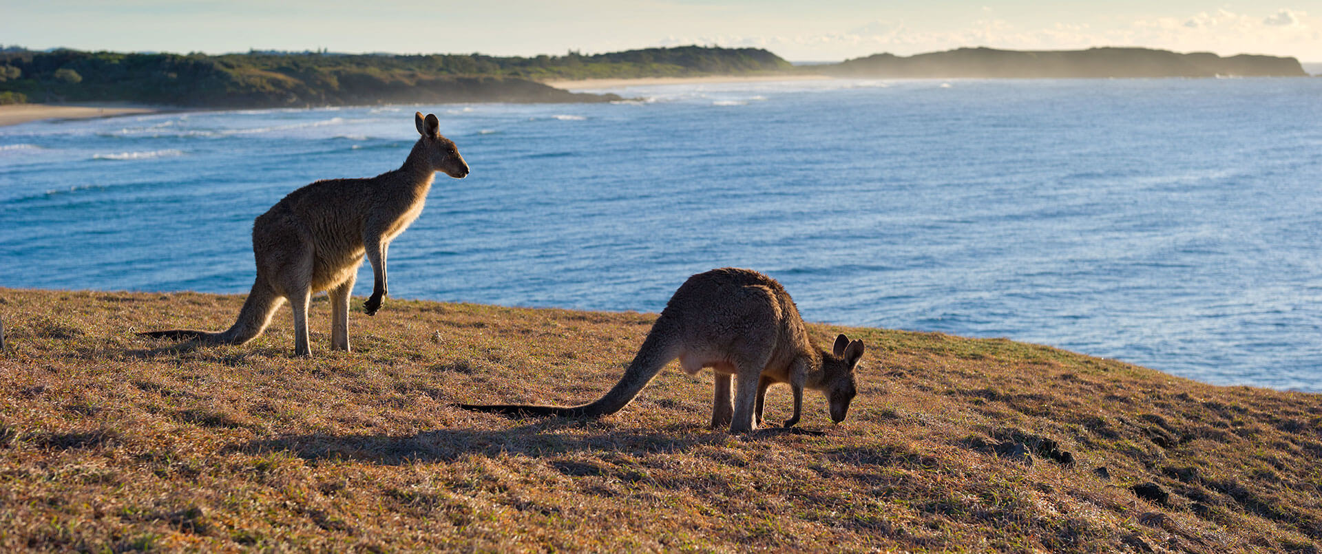 Australia over the top