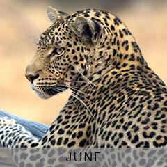 JUNE---ZAMBIA