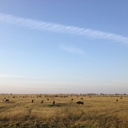 Augusta-Tanzania-Blog-herd-of-buffalo-on-the-serengeti