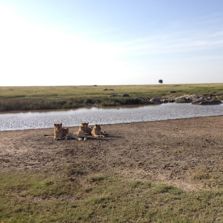 Augusta-Tanzania-Blog---lions-by-the-river