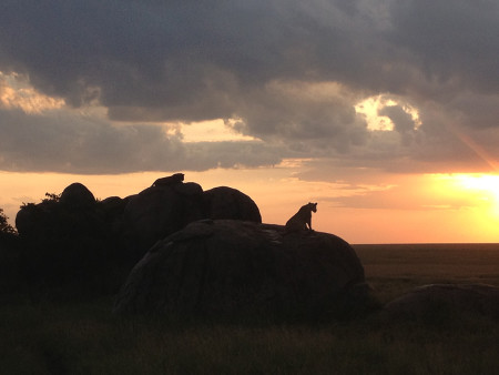 Augusta-Tanzania-Blog-lions-on-a-rock-at-sunset