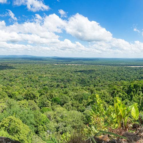 The Guianas' Experience