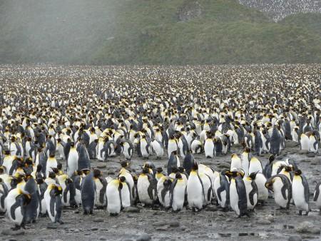 Celebrating-Shackleton-blog,-Penguin-colony2