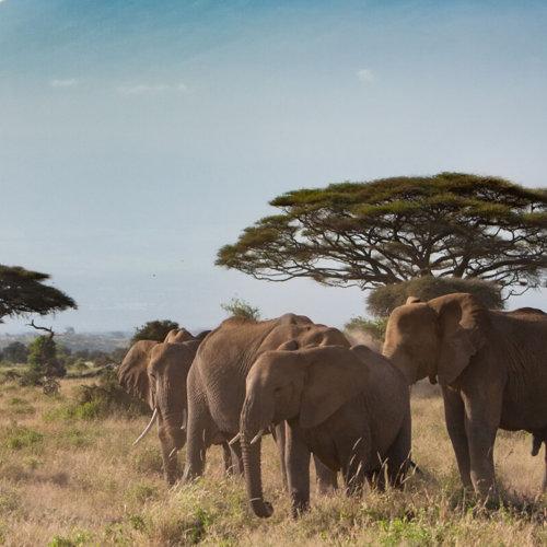 The Kenya Experience