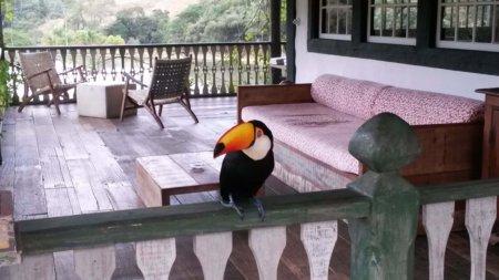 Toucan, Ibitipoca