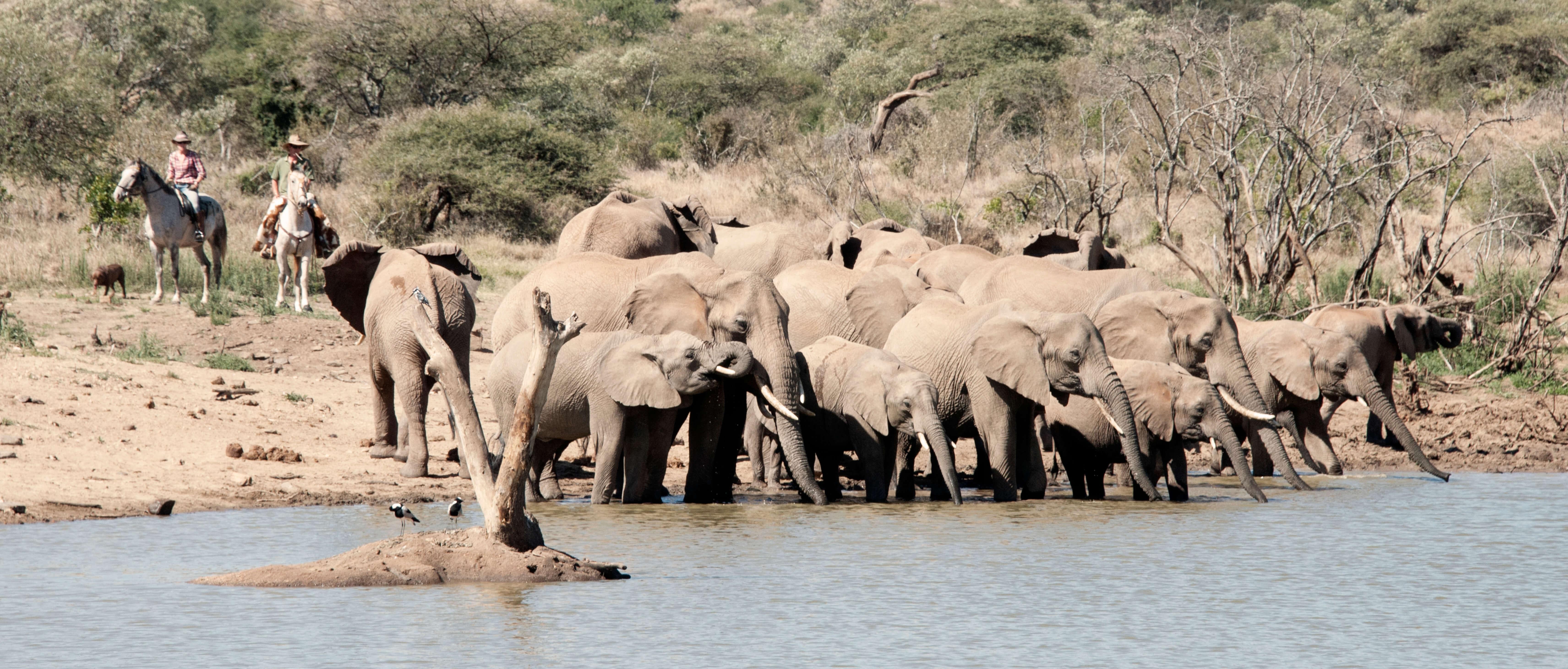 Exclusive Kenya Family Safari