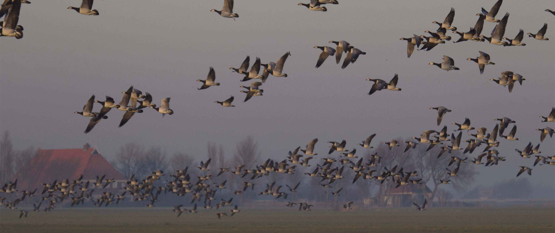 The Netherlands: Geese galore and a lot more!