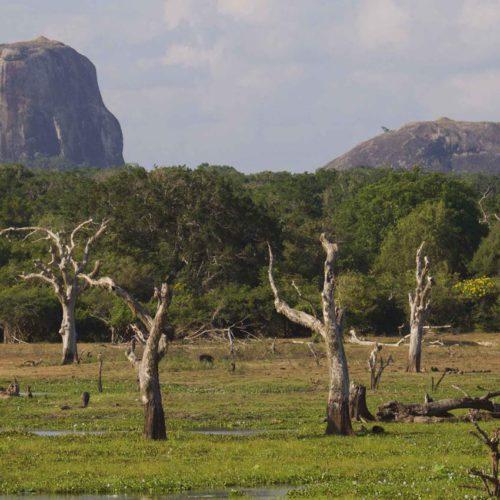 Sri Lanka with Wild Insights