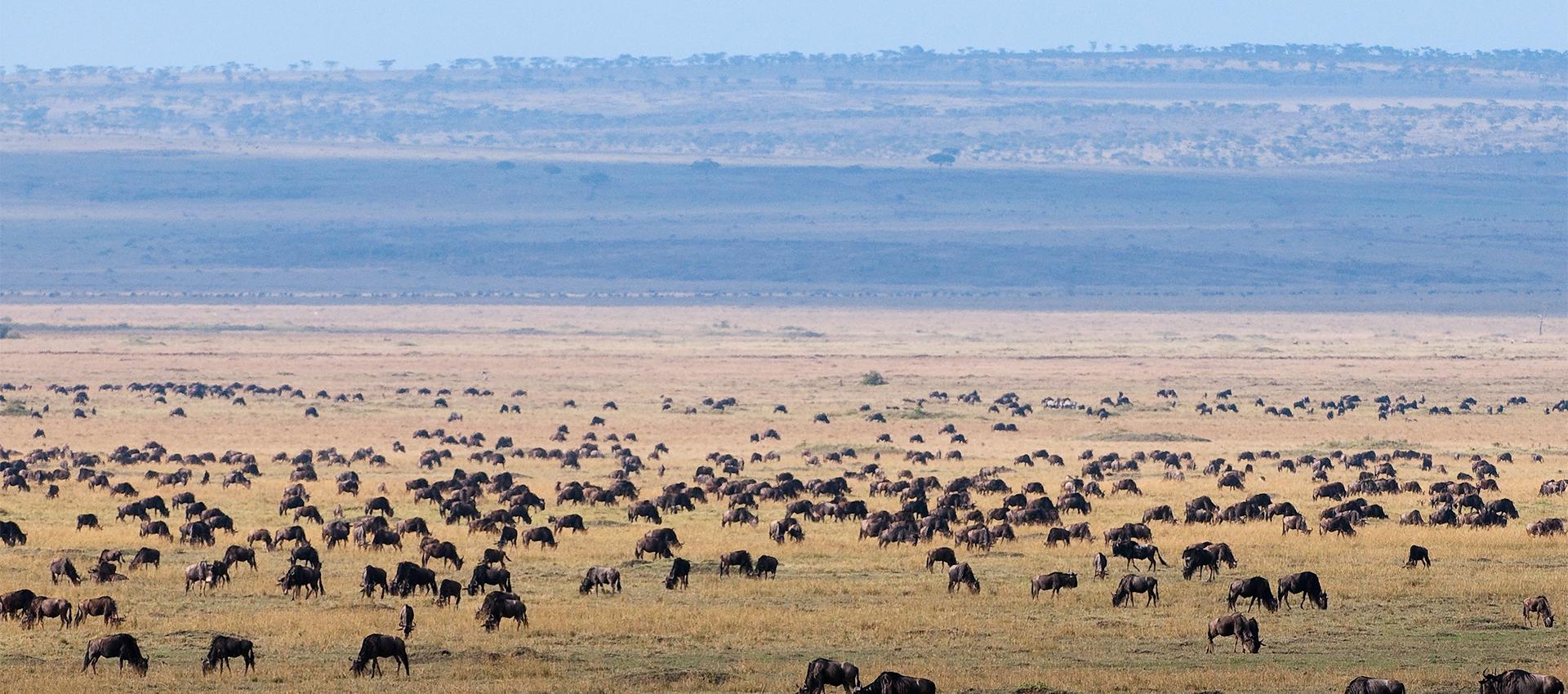Ultimate Kenya
