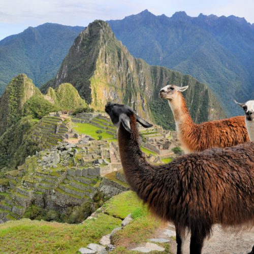 Peru and Galapagos for the Connoisseur