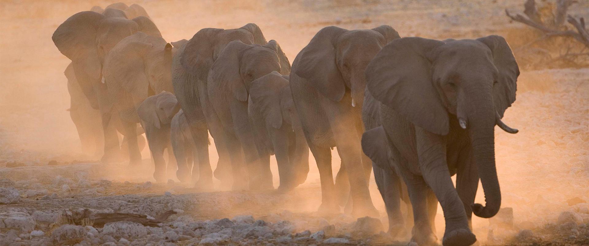 Wild Insights Namibia