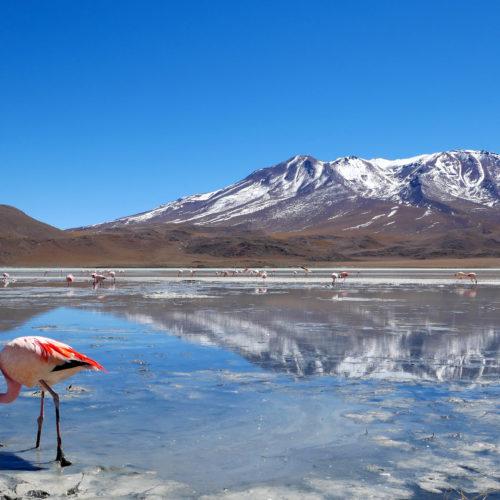 Los Flamencos Eco-Lodge, Salt Flats