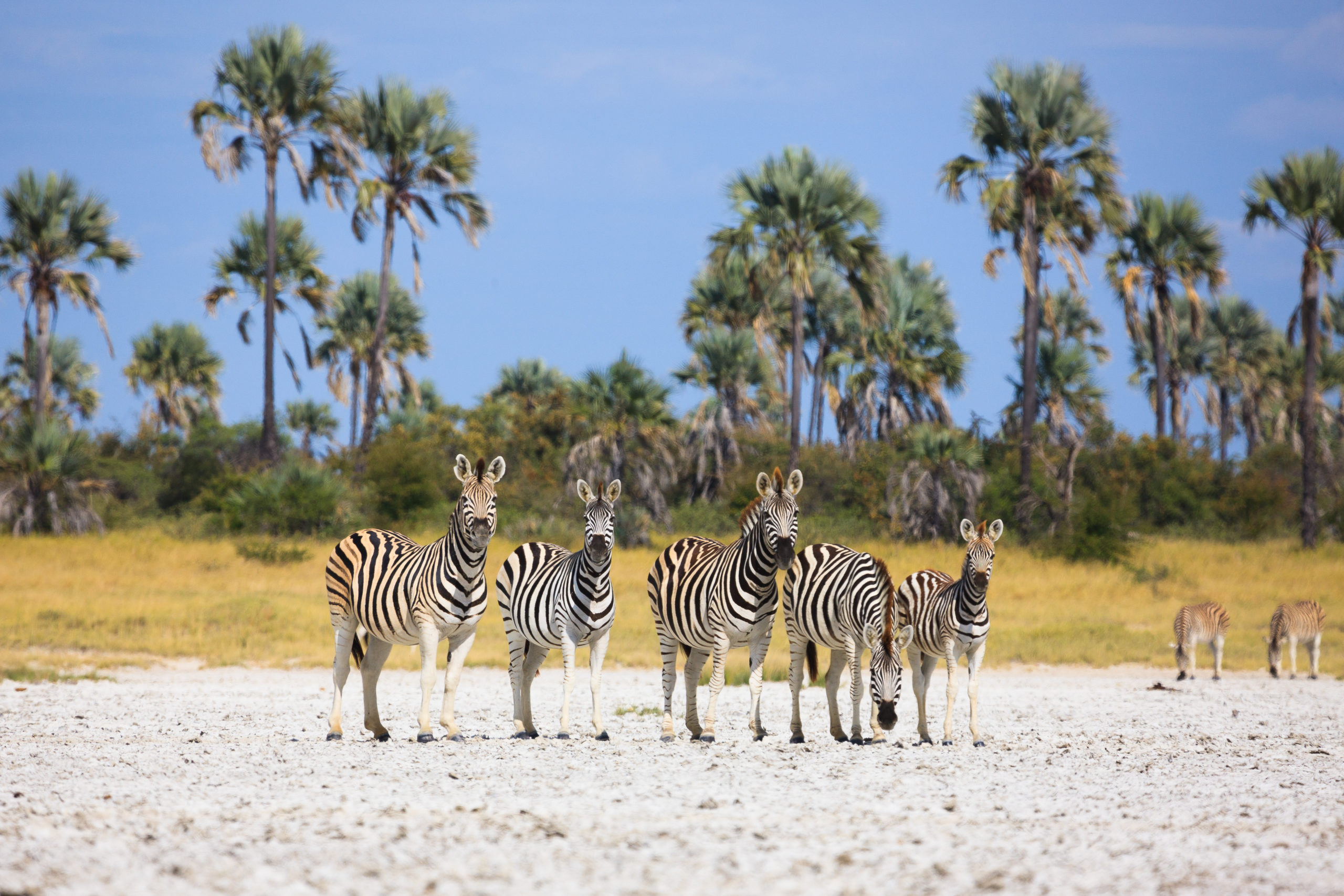 Botswana 'The Real Deal'