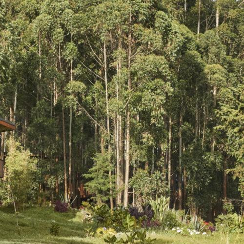One&Only Gorilla's Nest, Volcanoes National Park